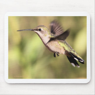 Humming bird in Flight Mouse Pad