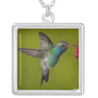 Humming bird in flight  Necklace