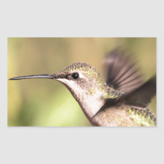 Humming bird in Flight Rectangular Sticker