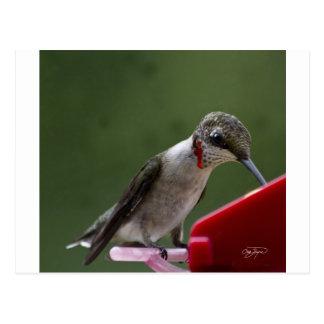 Humming Bird in Georgia Post Card