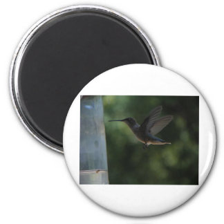 Humming Bird in Mid Air 2 Inch Round Magnet