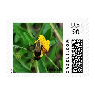 Humming Bird Moth Postage Stamp