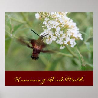 Humming Bird Moth Poster