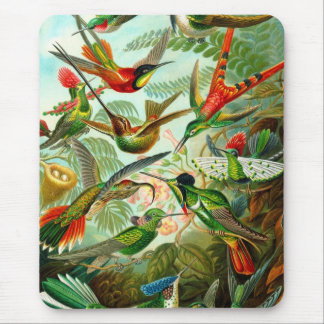 Humming Bird Mouse Pad