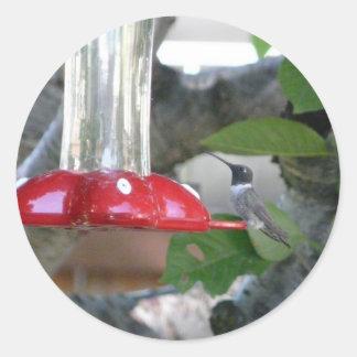 humming bird on feeder classic round sticker