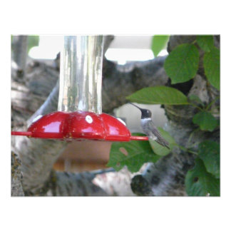 humming bird on feeder personalized invitations