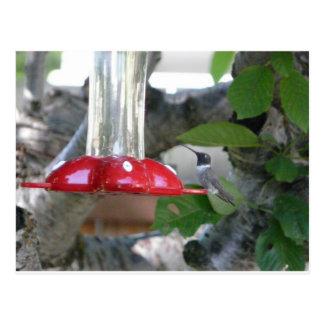 humming bird on feeder postcard