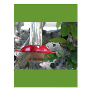 humming bird on feeder postcards
