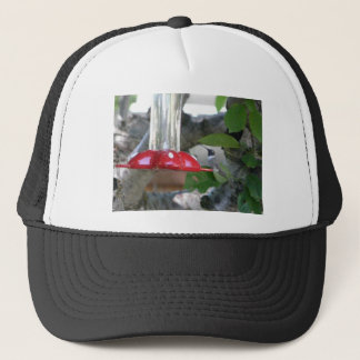 humming bird on feeder trucker hat