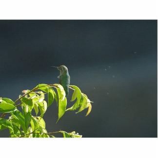 Humming Bird On Green Tree Photo Sculpture