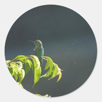 Humming Bird On Green Tree Stickers