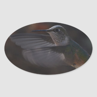 Humming bird oval sticker