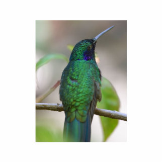 Humming Bird Photo Cut Outs