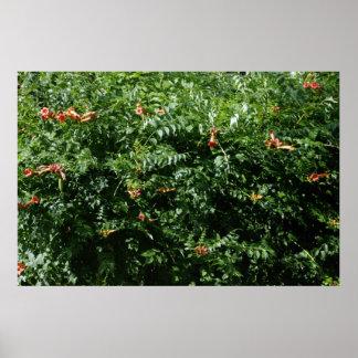 Humming Bird Plant Poster