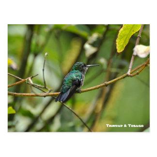 Humming Bird Post Card
