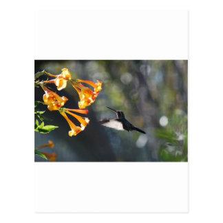 Humming Bird Post Cards