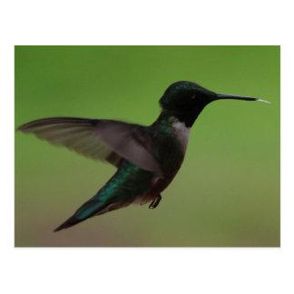 Humming Bird Postcards