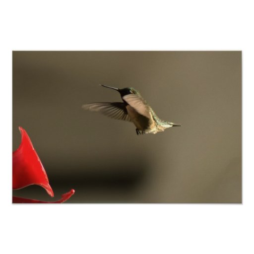 Humming Bird Print