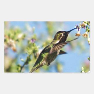 Humming Bird Rectangular Sticker