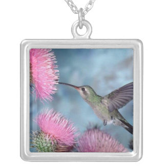 Humming Bird - Square Sterling Necklace