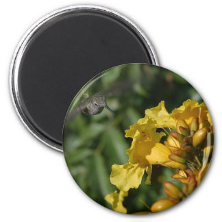 Humming Birds Flying Hovering 2 Inch Round Magnet