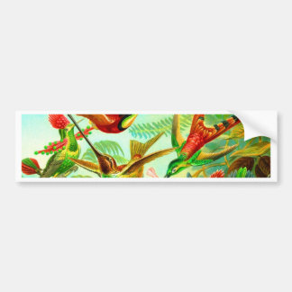 humming birds happy togither bumper sticker