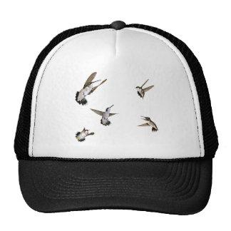 Humming Birds Trucker Hat