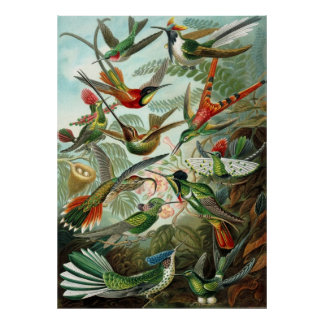 Humming Birds Lovers Poster