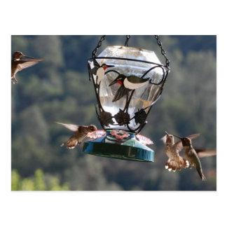 Humming Birds Postcard