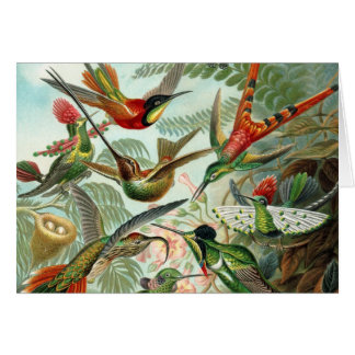 Humming birds vintage art colorful blank note card
