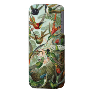 Humming birds vintage art colorful pattern, gift case for iPhone 4