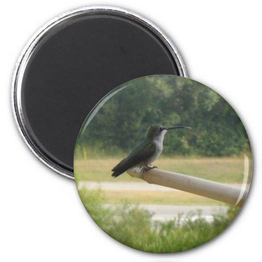 hummingbird7 imán redondo 5 cm