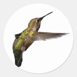 hummingbird_02 pegatina redonda