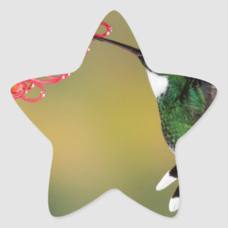 hummingbird 1.jpg star sticker
