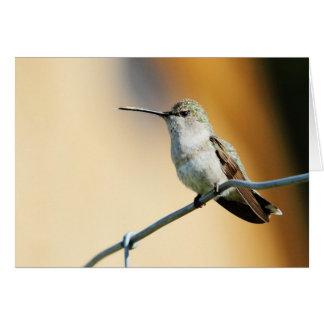 Hummingbird #2 greeting card
