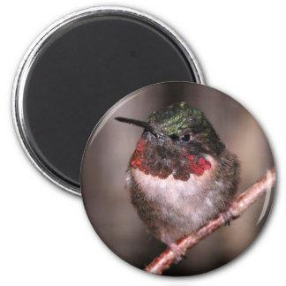 Hummingbird 2 Inch Round Magnet
