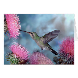 Hummingbird All Occasion Greeting Card