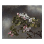 Hummingbird and Apple Blossoms Martin J. Heade Posters