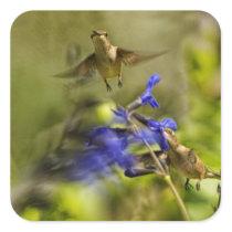 Hummingbird and Blue Sage Square Sticker
