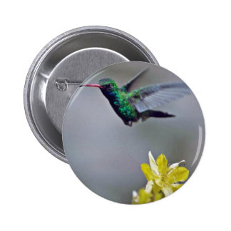 Hummingbird and columbine Red flowers Pins