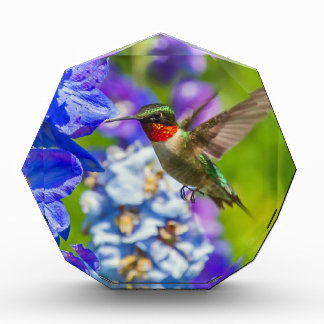 Hummingbird And Delphinium Acrylic Award
