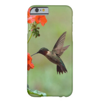 Hummingbird And Flowers Barely There iPhone 6 Case