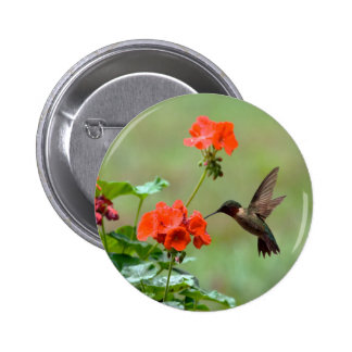 Hummingbird And Flowers Buttons