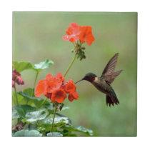Hummingbird And Flowers Ceramic Tile