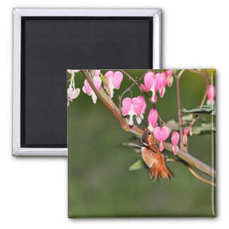 Hummingbird and Flowers Picture Magnet