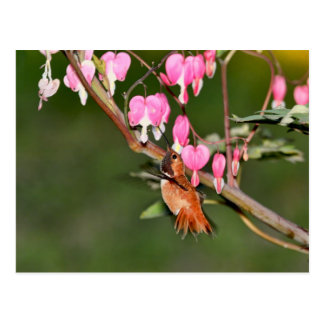 Hummingbird and Flowers Picture Postcard