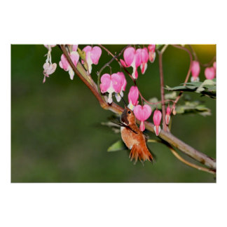 Hummingbird and Flowers Picture Poster