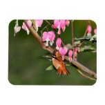 Hummingbird and Flowers Picture Rectangular Magnet
