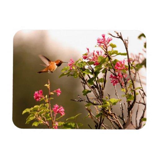 Hummingbird and Flowers Rectangular Photo Magnet