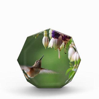 Hummingbird and Fushia Plant Acrylic Award